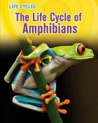 Life Cycle of Amphibians