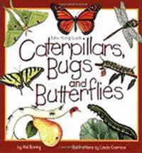 Caterpillars, Bugs & Butterflies