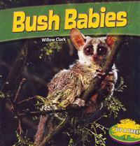 Bush Babies