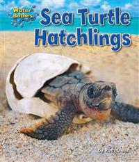 Sea Turtle Hatchlings