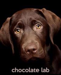 Chocolate Lab: A Gift Journal for People Who Love Dogs: Chocolate Labrador Retriever Puppy Edition