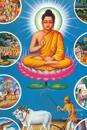 Lotus Buddah Meditation Journal