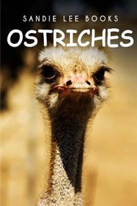 Ostriches - Sandie Lee Books