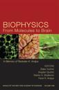 Biophysics from Molecules to Brain: In Memory of Radolslav K. Andjus, Volume 1048