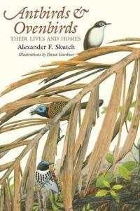 Antbirds & Ovenbirds