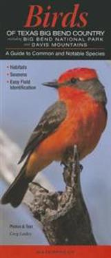 Birds of Texas Big Bend Country Incl. Big Bend National Park & Davis Mtns.: A Guide to Common & Notable Species
