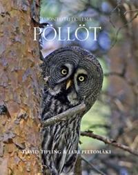 Luontotutkielma - Pöllöt