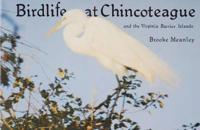 Bird Life at Chincoteague and the Virginia Barrier Islands
