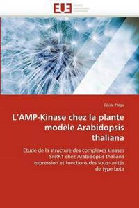 L Amp-Kinase Chez La Plante Mod�le Arabidopsis Thaliana