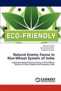 Natural Enemy Fauna in Rice-Wheat System of India