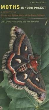Moths in Your Pocket