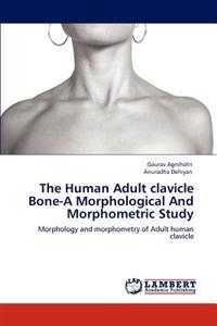 The Human Adult Clavicle Bone-A Morphological and Morphometric Study
