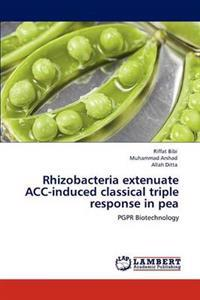 Rhizobacteria Extenuate Acc-Induced Classical Triple Response in Pea