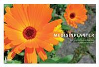 Medisinplanter - Berit Smestad Paulsen, Hege Ekeli, Signe Holta Ringertz | Inprintwriters.org