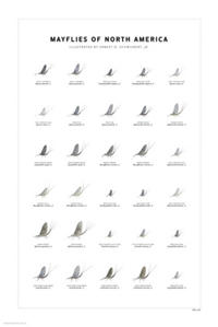 Mayflies of North America Print Set
