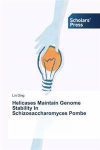 Helicases Maintain Genome Stability in Schizosaccharomyces Pombe