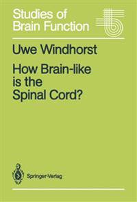 How Brain-like is the Spinal Cord?
