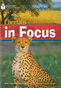 Cheetahs in Focus