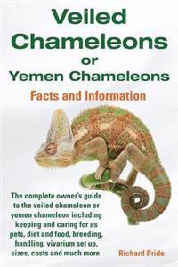 Veiled Chameleons or Yemen Chameleons