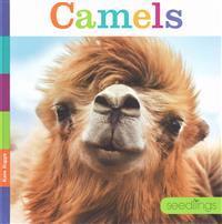 Seedlings Camels