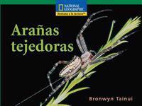 Arañas tejedoras / Weaver spiders