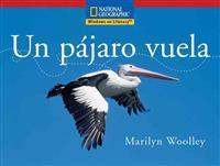 Un pájaro vuela / Flightless Birds