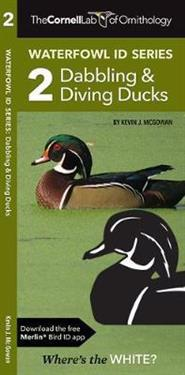 Dabbling Ducks & Diving Ducks