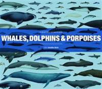 Whales, dolphins and porpoises - a natural history and species guide