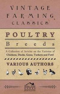 Poultry Breeds - A Collection of Articles on the Varieties of Chickens, Ducks, Geese, Turkeys and Fowl