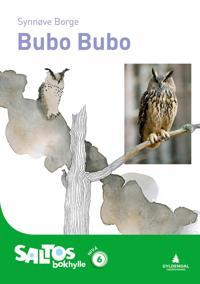 Bubo bubo - Synnøve Borge | Ridgeroadrun.org