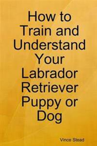 How to Train and Understand Your Labrador Retriever Puppy or Dog
