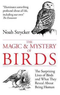 Magic and Mystery of Birds
