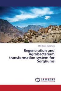 Regeneration and Agrobacterium Transformation System for Sorghums