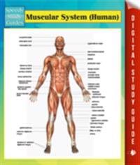 Muscular System (Human) Speedy Study Guides