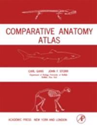 Comparative Anatomy Atlas