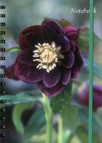 Notebook, Hellebore