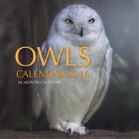 Owls Calendar 2016: 16 Month Calendar