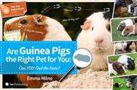 Are Guinea Pigs the Right Pet for You