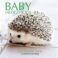 Baby Hedgehogs Calendar 2016: 16 Month Calendar