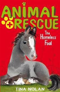 Homeless Foal