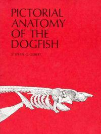 Pictorial Anatomy of the Dogfish