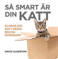 Så smart är din katt