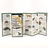Florida's Mammals, Reptiles, and Amphibians