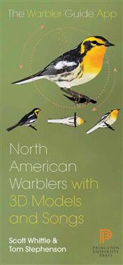 North American Warbler With 3D Models and Songs