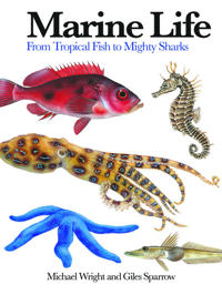 Marine life - from tropical fish to mighty sharks