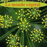 Monde Vegetal 2017