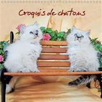 Croquis de Chatons 2017