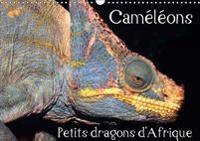 Cameleons - Petits Dragons D'afrique. 2017