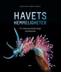 Havets hemmeligheter; en undervannsreise langs norskekysten