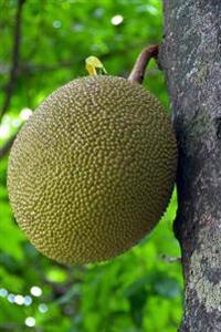 Jakfruit (Jack Fruit) on a Tree Journal: 150 Page Lined Notebook/Diary
